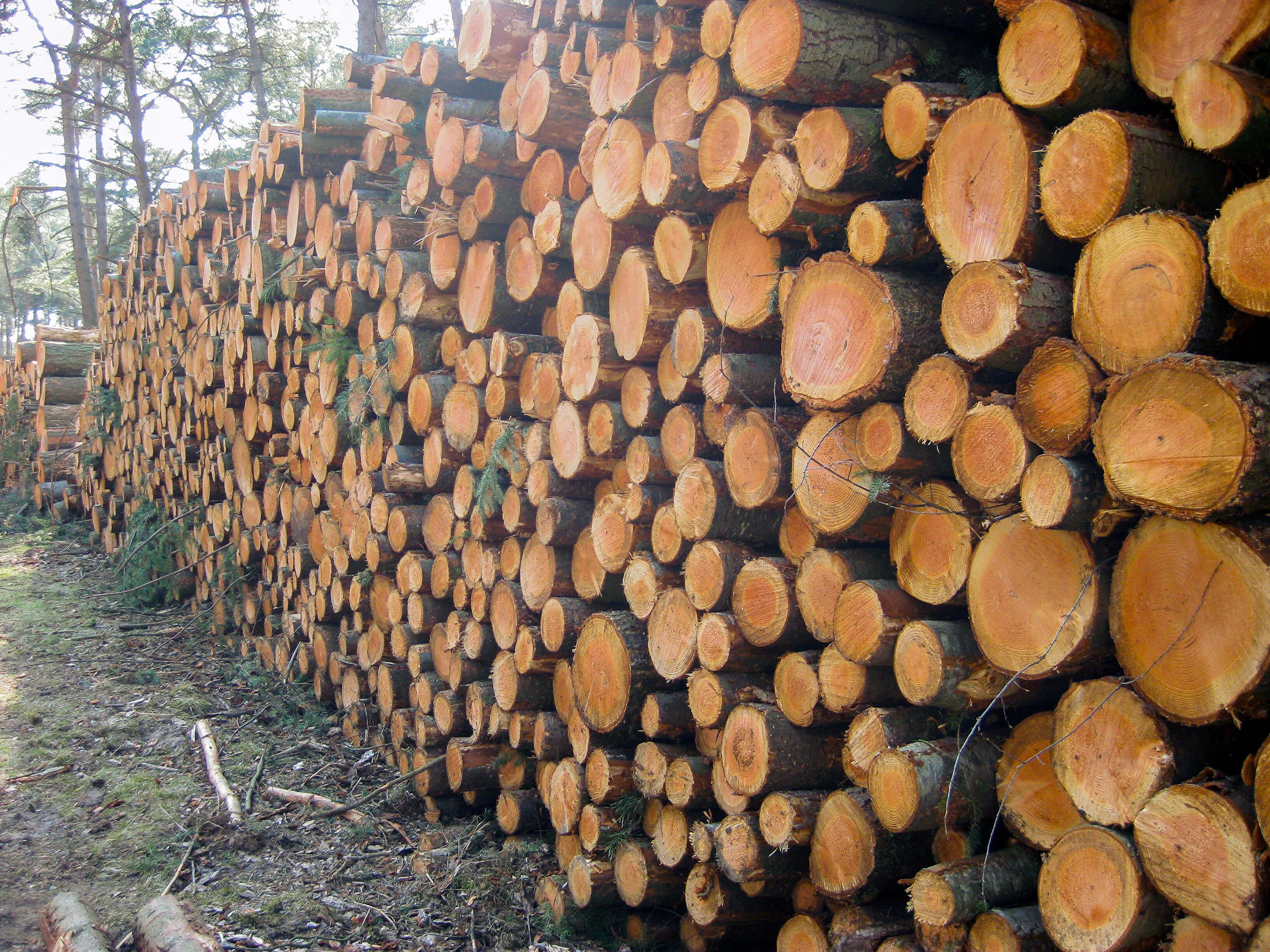 Foto van boomstammen op de pagina over wat je kunt verwachten van wandelcoach Claudia van Leent.